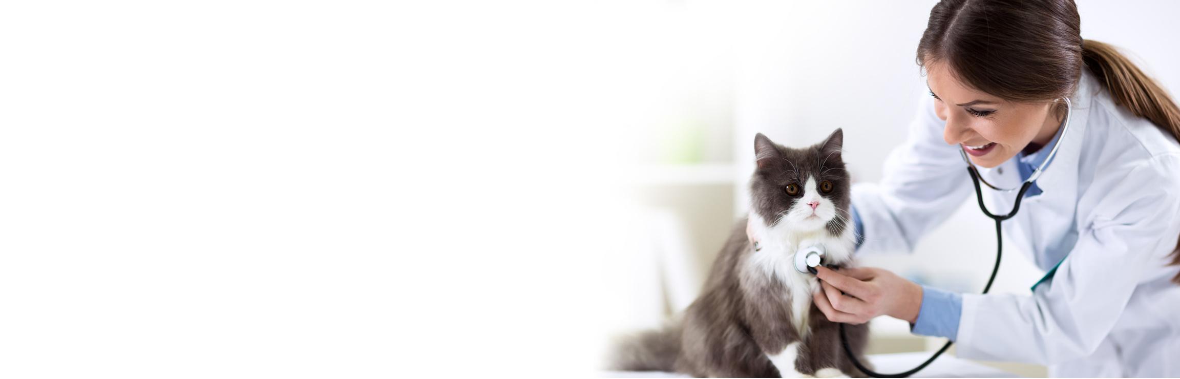 консультация ветеринаров