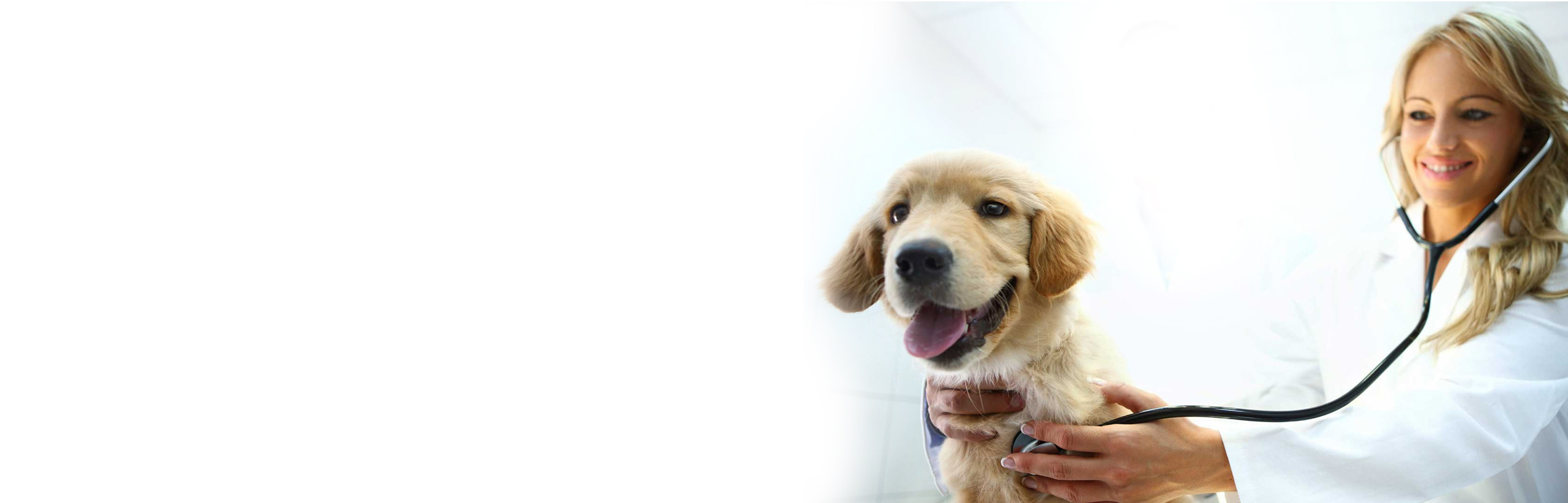 Ветеринар онлайн