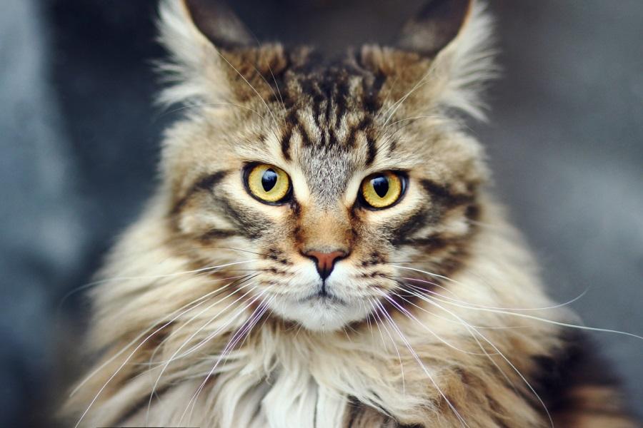 Кровотечение из носа у кошек